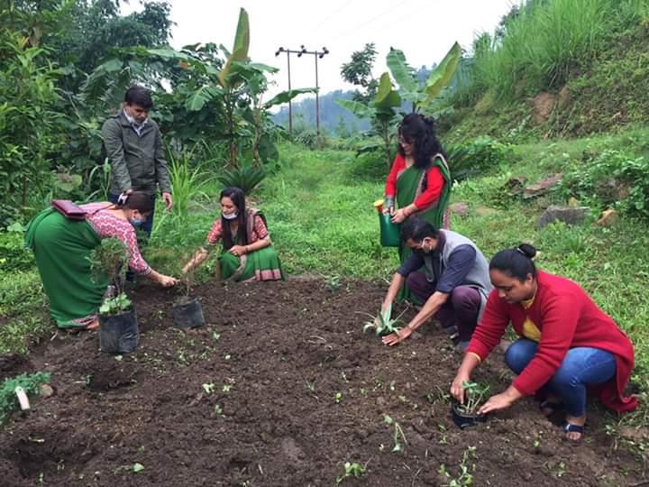 वतावरण दिवसमा इलाममा वृक्षारोपण
